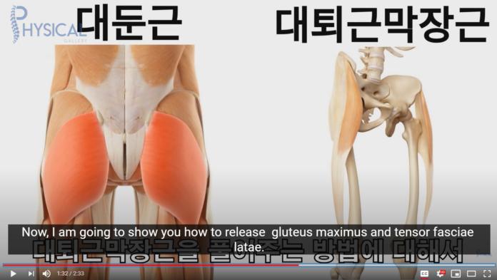 gluteus maximus tensor fasciiae