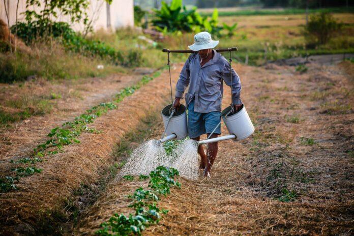farm-watering